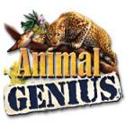 Animal Genius тоглоом
